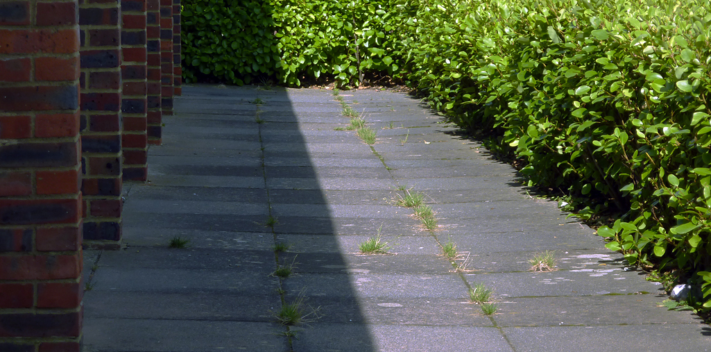 Saturday August 23rd (2014) brick paving hedge shadow