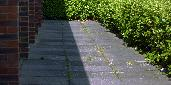 23rd: brick paving hedge shadow