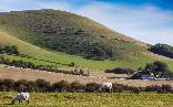 8th: mount caburn and sheep