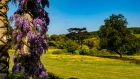west dean wisteria (and parkland)