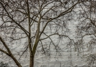 Thu 13th<br/>london plane and wrapped building